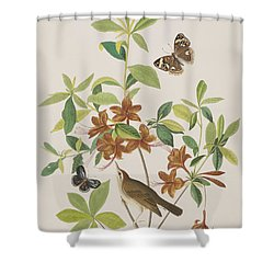 Brown Headed Worm Eating Warbler Shower Curtain by John James Audubon