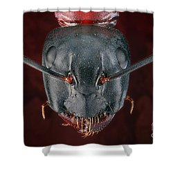 Carpenter Ant Shower Curtain by Matthias Lenke
