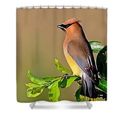 Shower Curtain featuring the photograph Cedar Waxwing by Rodney Campbell