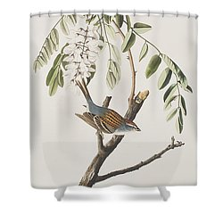Chipping Sparrow Shower Curtain by John James Audubon