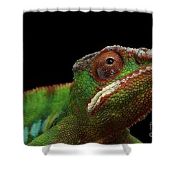 Closeup Head Of Panther Chameleon, Reptile In Profile View Isolated On Black Background Shower Curtain by Sergey Taran