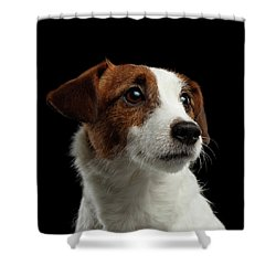 Closeup Portrait Of Jack Russell Terrier Dog On Black Shower Curtain by Sergey Taran