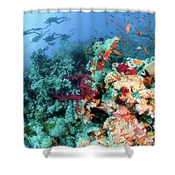 Coral Reef  Shower Curtain by Hagai Nativ