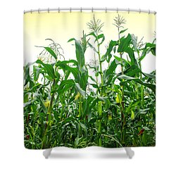 Corn Field Shower Curtain by Carlos Caetano