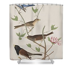 Finches Shower Curtain by John James Audubon