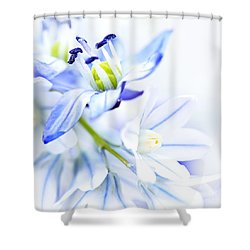 First Spring Flowers Shower Curtain by Elena Elisseeva