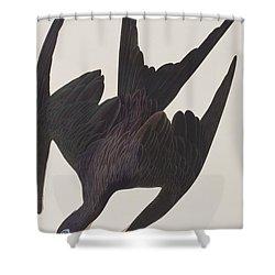 Frigate Pelican Shower Curtain by John James Audubon