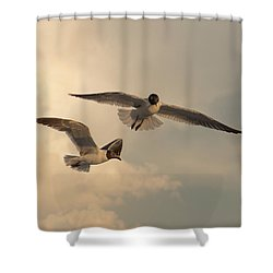 Gliders Shower Curtain by Don Spenner