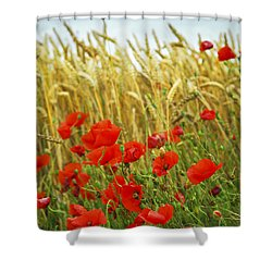 Grain And Poppy Field Shower Curtain by Elena Elisseeva