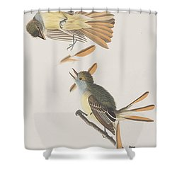 Great Crested Flycatcher Shower Curtain by John James Audubon