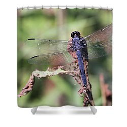 Hanging On Shower Curtain by Karol Livote