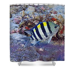 Hawaii, Marine Life Shower Curtain by Dave Fleetham - Printscapes