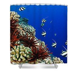Hawaiian Reef Scene Shower Curtain by Dave Fleetham - Printscapes