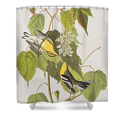 Hemlock Warbler Shower Curtain by John James Audubon