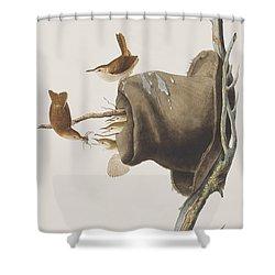 House Wren Shower Curtain by John James Audubon