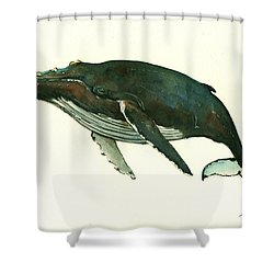 Humpback Whale  Shower Curtain by Juan  Bosco