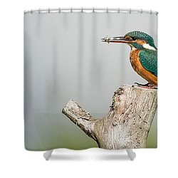 Kingfisher Shower Curtain by Paul Neville