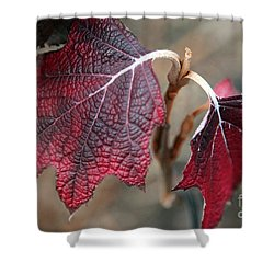 Leaves Shower Curtain by Amanda Barcon