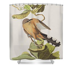 Mangrove Cuckoo Shower Curtain by John James Audubon