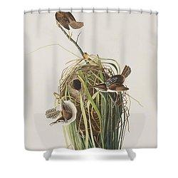 Marsh Wren  Shower Curtain by John James Audubon