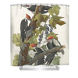 Pileated Woodpecker Shower Curtain by John James Audubon