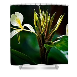 Rain Refreshed Shower Curtain by Christopher Holmes