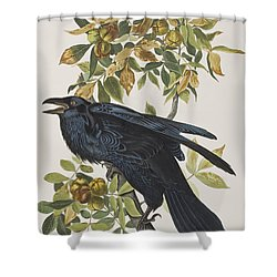 Raven Shower Curtain by John James Audubon
