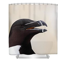 Razorbill Portrait Shower Curtain by Bruce J Robinson
