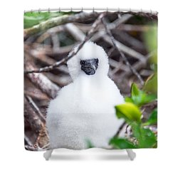 Red Footed Booby Chick Shower Curtain by Jess Kraft