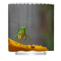 Right At You  Shower Curtain by Karol Livote