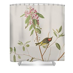 Ruby Crowned Wren Shower Curtain by John James Audubon