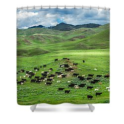 Salt And Pepper Pasture Shower Curtain by Todd Klassy