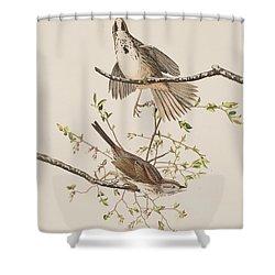 Song Sparrow Shower Curtain by John James Audubon