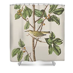 Tennessee Warbler Shower Curtain by John James Audubon