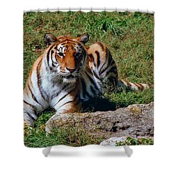 Tiger II Shower Curtain by Gary Adkins
