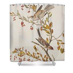 Tree Sparrow Shower Curtain by John James Audubon