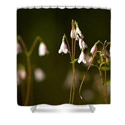 Twinflower Shower Curtain by Jouko Lehto