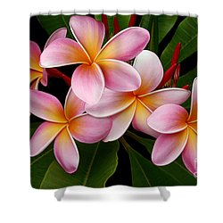 Wailua Sweet Love Shower Curtain by Sharon Mau