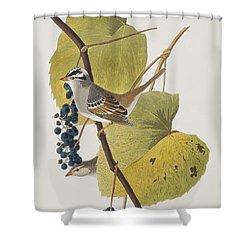 White-crowned Sparrow Shower Curtain by John James Audubon