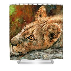 Young Lion Shower Curtain by David Stribbling
