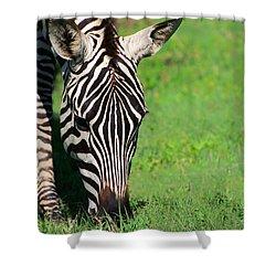 Zebra Shower Curtain by Sebastian Musial