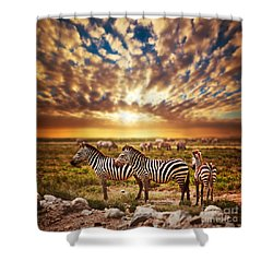 Zebras Herd On African Savanna At Sunset. Shower Curtain by Michal Bednarek