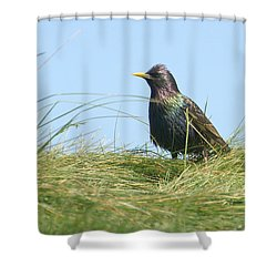 A Place In The Sun Shower Curtain by Fraida Gutovich