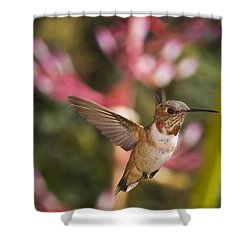 Allen's Hummingbird Shower Curtain by Mike Herdering