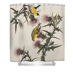 American Goldfinch Shower Curtain by John James Audubon