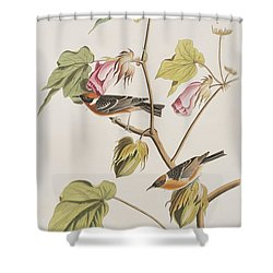 Bay Breasted Warbler Shower Curtain by John James Audubon