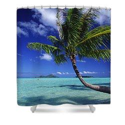 Bora Bora, Palm Tree Shower Curtain by Ron Dahlquist - Printscapes