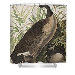 Canada Goose Shower Curtain by John James Audubon