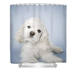 Cocker Spaniel Shower Curtain by David DuChemin
