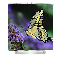 Shower Curtain featuring the photograph Giant Swallowtail by Rodney Campbell